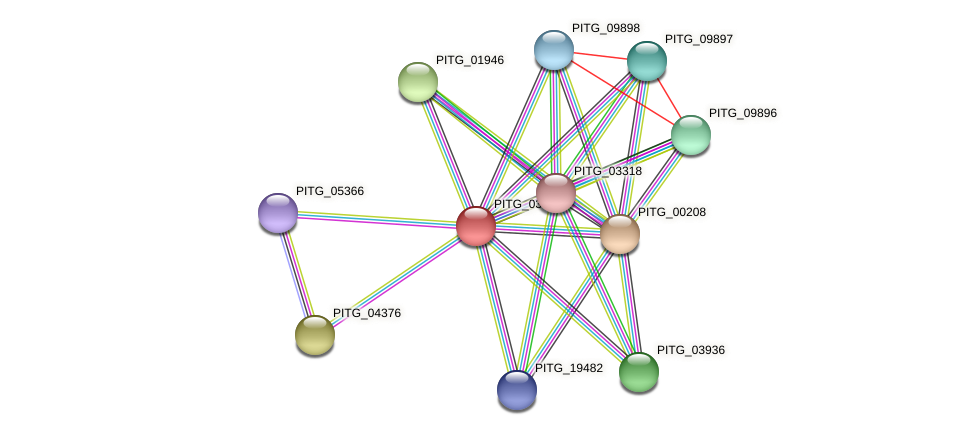 PITG_03334 protein (Phytophthora infestans) - STRING interaction network