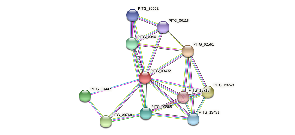 PITG_03432 protein (Phytophthora infestans) - STRING interaction network