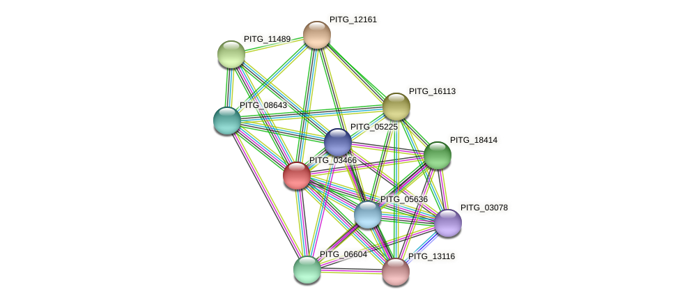 PITG_03466 protein (Phytophthora infestans) - STRING interaction network