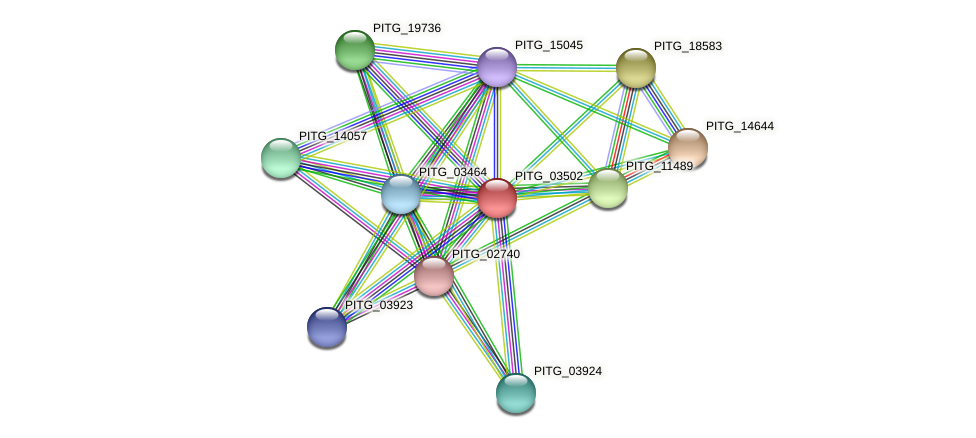 PITG_03502 protein (Phytophthora infestans) - STRING interaction network