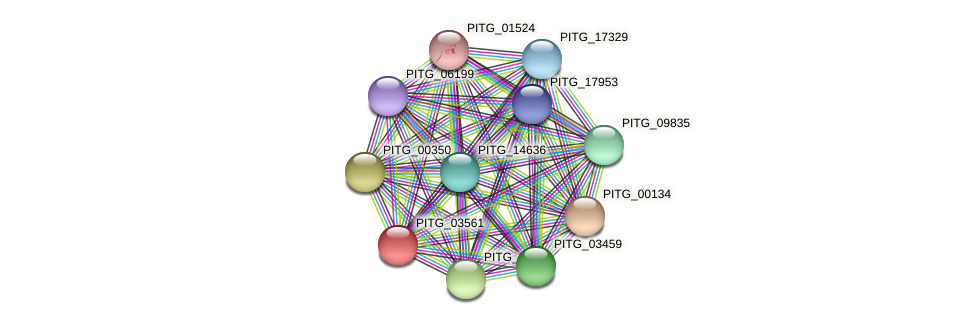 PITG_03561 protein (Phytophthora infestans) - STRING interaction network