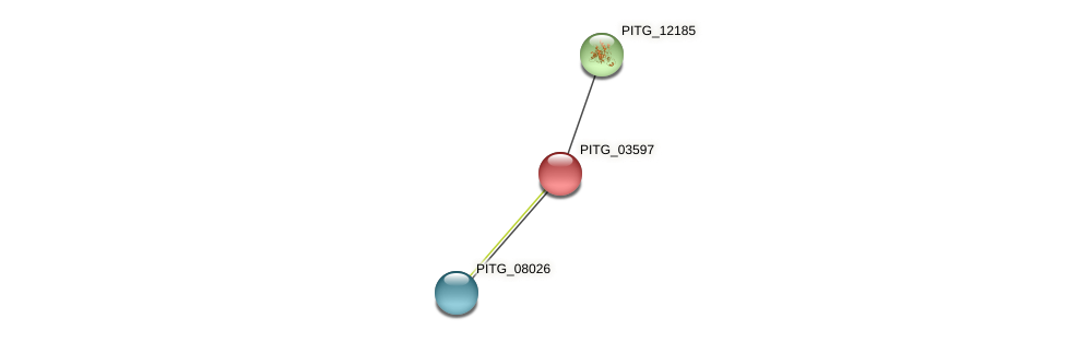 PITG_03597 protein (Phytophthora infestans) - STRING interaction network