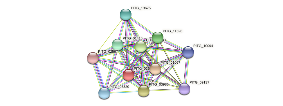PITG_03600 protein (Phytophthora infestans) - STRING interaction network