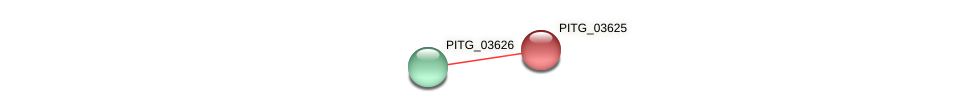 PITG_03625 protein (Phytophthora infestans) - STRING interaction network