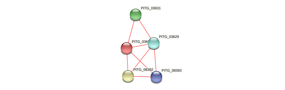 PITG_03630 protein (Phytophthora infestans) - STRING interaction network