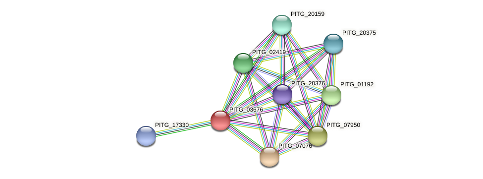 PITG_03676 protein (Phytophthora infestans) - STRING interaction network