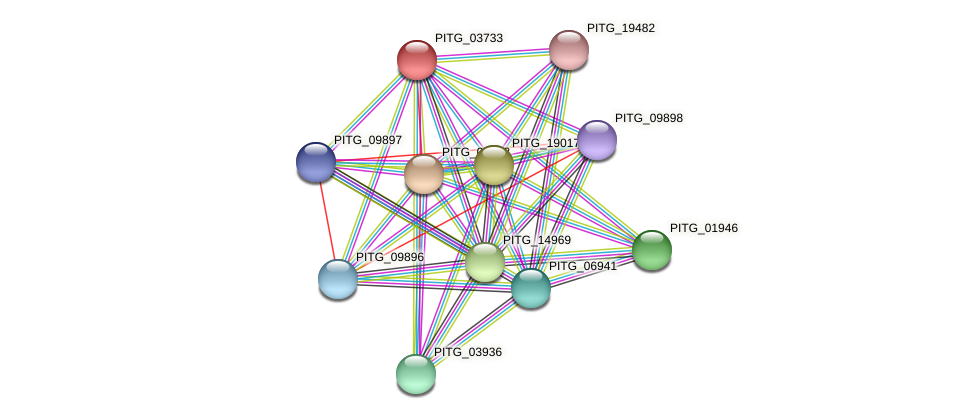 PITG_03733 protein (Phytophthora infestans) - STRING interaction network