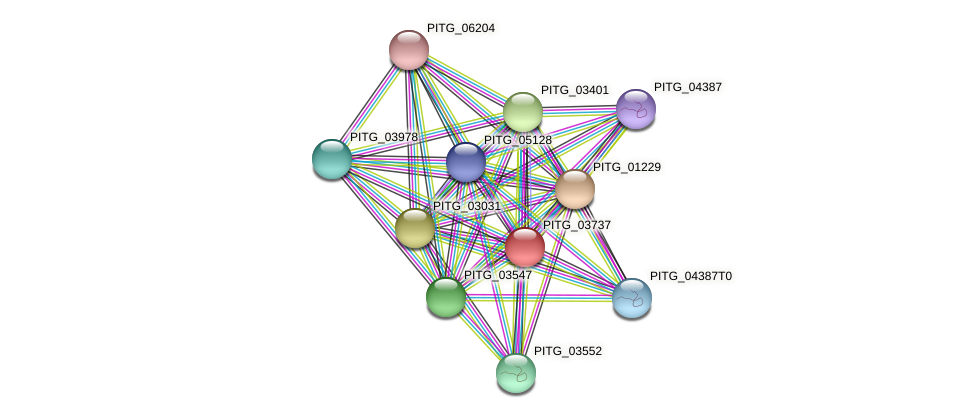 PITG_03737 protein (Phytophthora infestans) - STRING interaction network