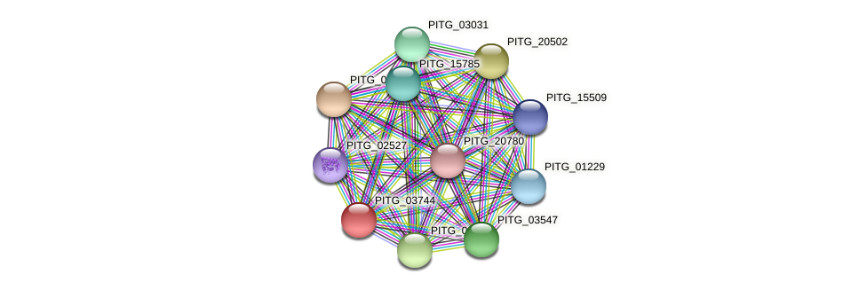 PITG_03744 protein (Phytophthora infestans) - STRING interaction network