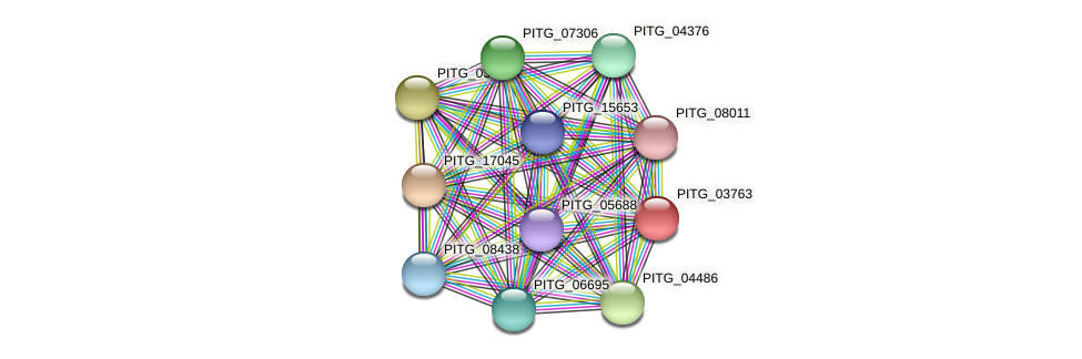 PITG_03763 protein (Phytophthora infestans) - STRING interaction network