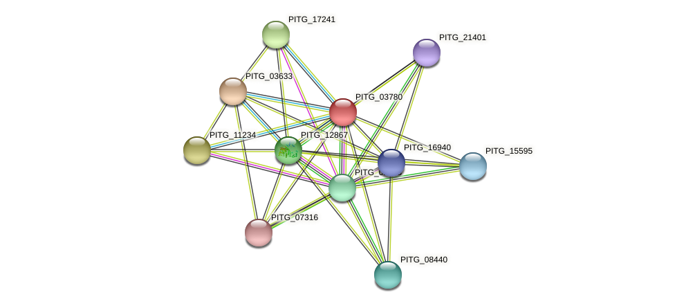 PITG_03780 protein (Phytophthora infestans) - STRING interaction network