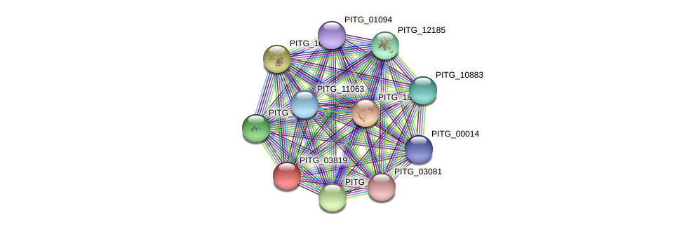 PITG_03819 protein (Phytophthora infestans) - STRING interaction network