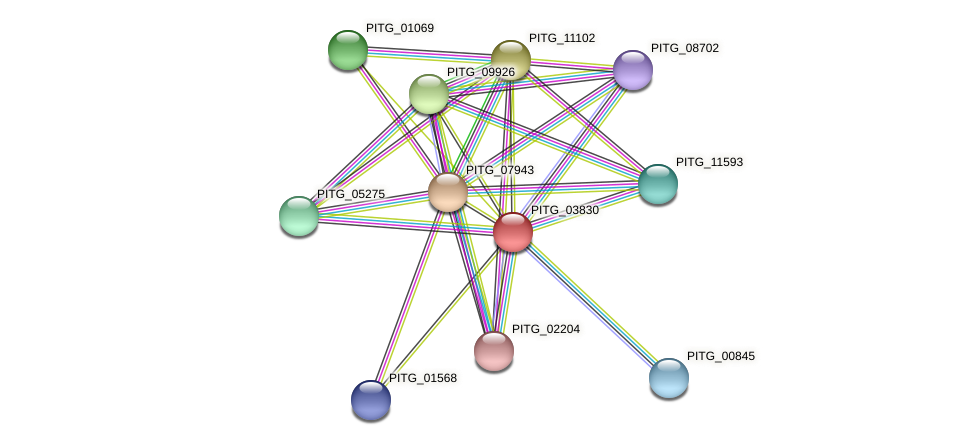 PITG_03830 protein (Phytophthora infestans) - STRING interaction network