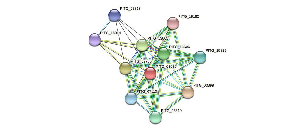 PITG_03930 protein (Phytophthora infestans) - STRING interaction network