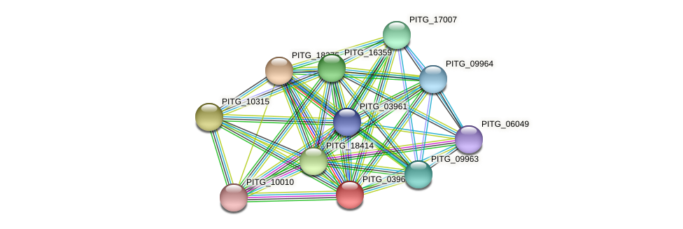 PITG_03960 protein (Phytophthora infestans) - STRING interaction network