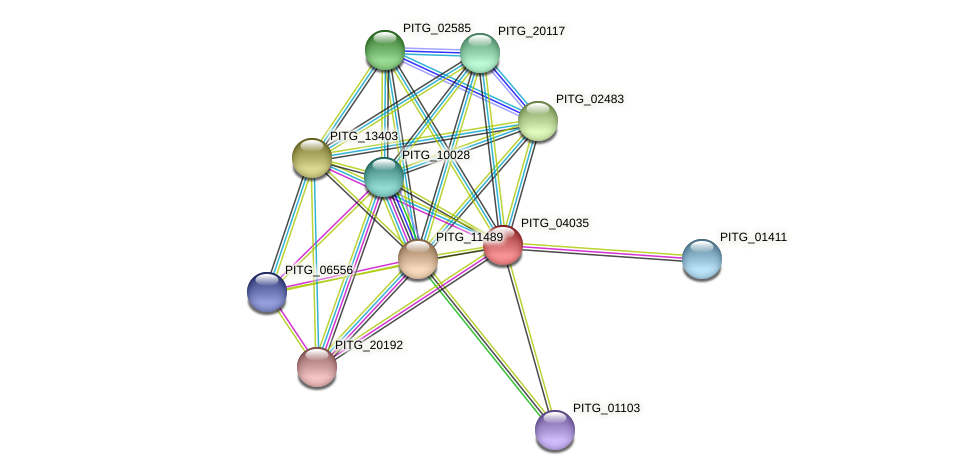 PITG_04035T0 protein (Phytophthora infestans) - STRING interaction network