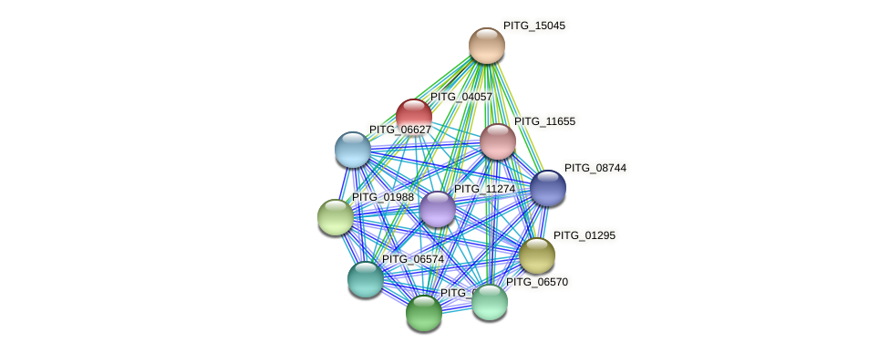 PITG_04057 protein (Phytophthora infestans) - STRING interaction network