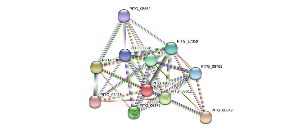 PITG_04232 protein (Phytophthora infestans) - STRING interaction network