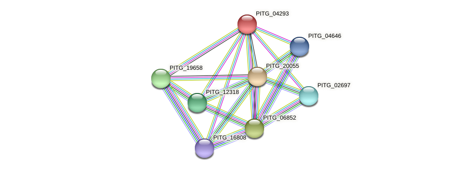 PITG_04293 protein (Phytophthora infestans) - STRING interaction network