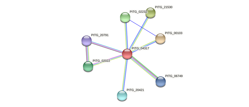 PITG_04317 protein (Phytophthora infestans) - STRING interaction network