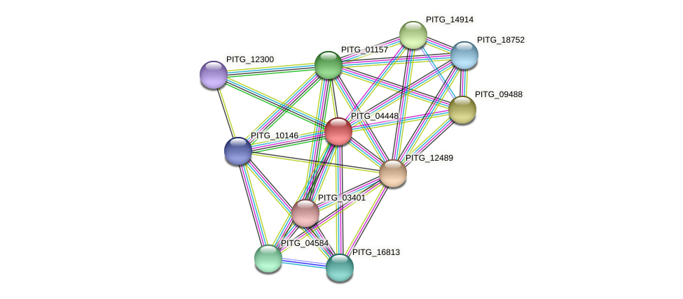 PITG_04448 protein (Phytophthora infestans) - STRING interaction network