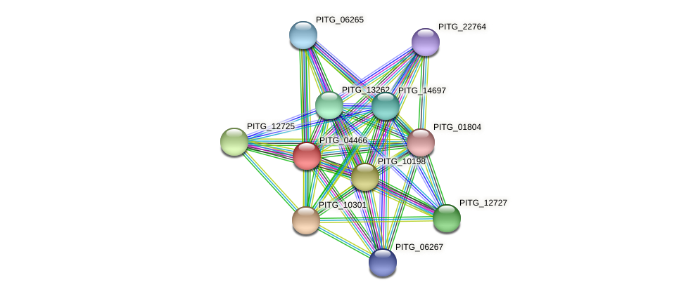 PITG_04466 protein (Phytophthora infestans) - STRING interaction network