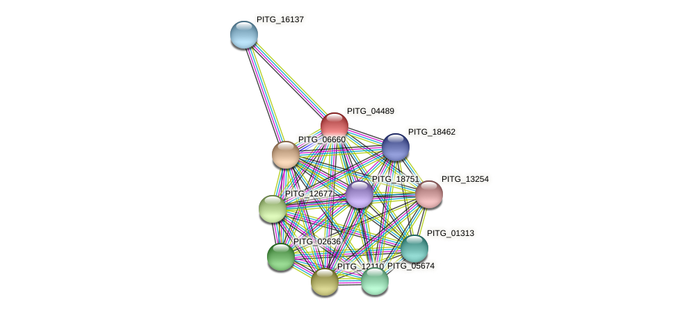 PITG_04489 protein (Phytophthora infestans) - STRING interaction network