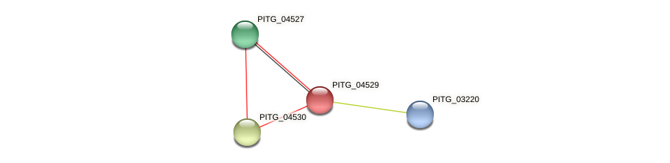 PITG_04529 protein (Phytophthora infestans) - STRING interaction network