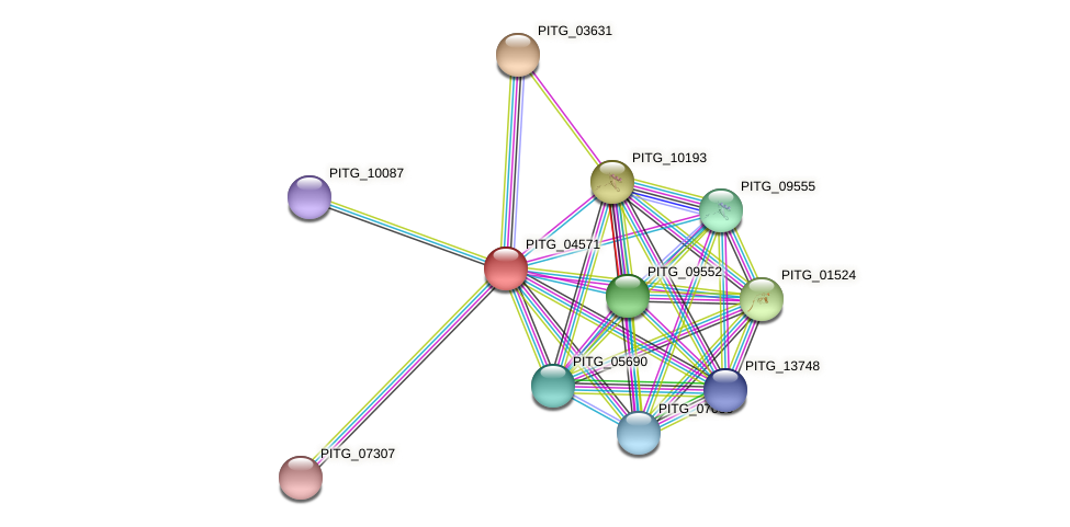 PITG_04571 protein (Phytophthora infestans) - STRING interaction network