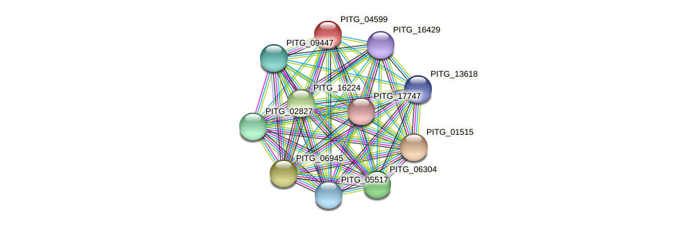 PITG_04599 protein (Phytophthora infestans) - STRING interaction network