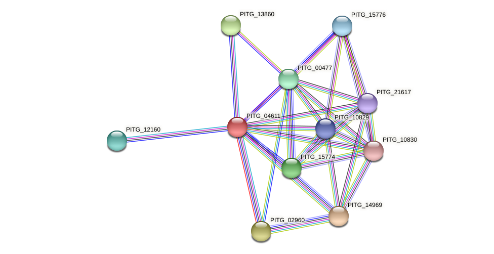 PITG_04611 protein (Phytophthora infestans) - STRING interaction network