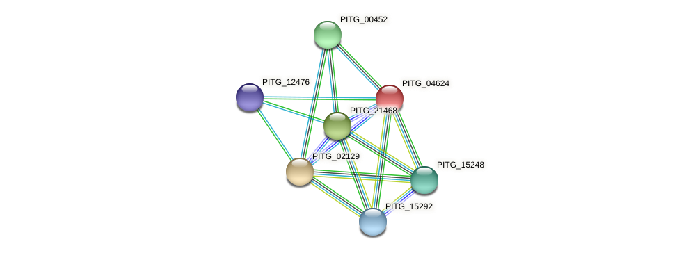 PITG_04624 protein (Phytophthora infestans) - STRING interaction network