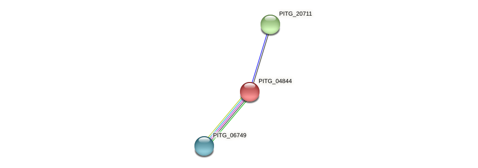 PITG_04844 protein (Phytophthora infestans) - STRING interaction network