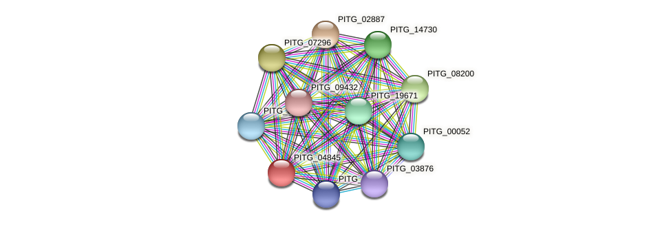 PITG_04845 protein (Phytophthora infestans) - STRING interaction network