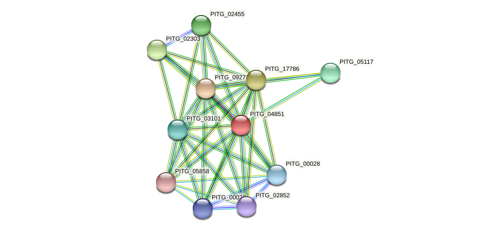 PITG_04851 protein (Phytophthora infestans) - STRING interaction network