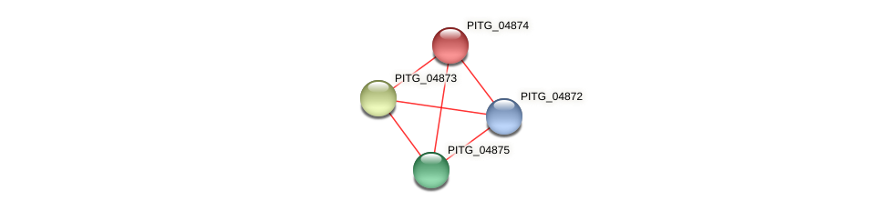 PITG_04874 protein (Phytophthora infestans) - STRING interaction network