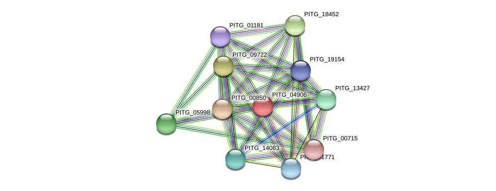PITG_04906 protein (Phytophthora infestans) - STRING interaction network