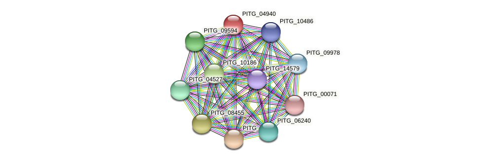 PITG_04940 protein (Phytophthora infestans) - STRING interaction network