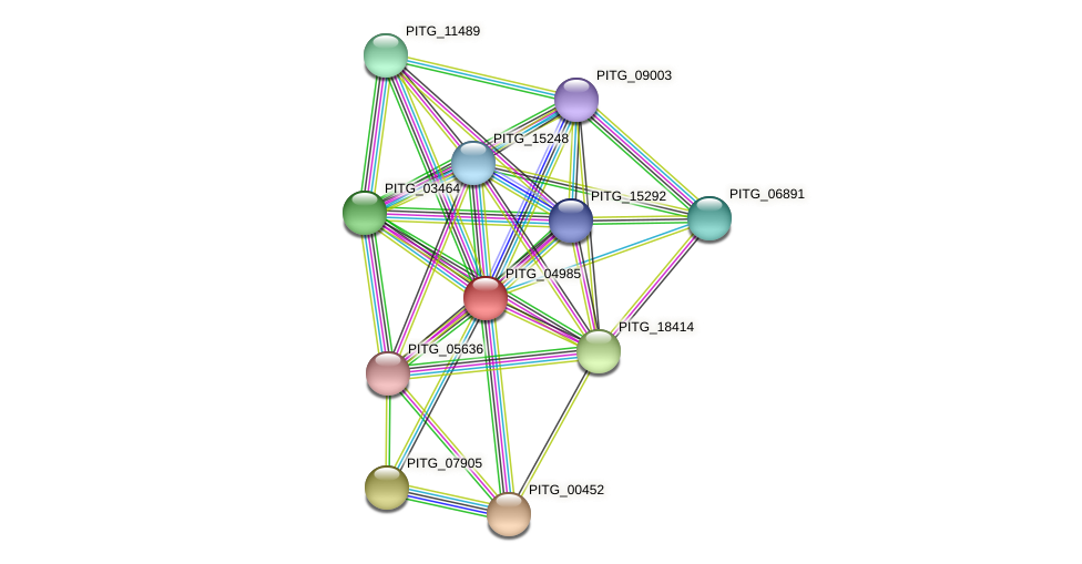 PITG_04985 protein (Phytophthora infestans) - STRING interaction network