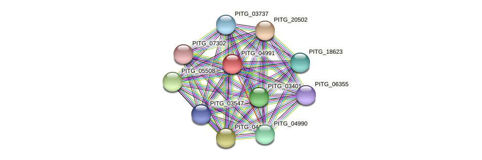 PITG_04991 protein (Phytophthora infestans) - STRING interaction network