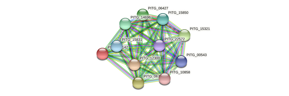 PITG_05048 protein (Phytophthora infestans) - STRING interaction network