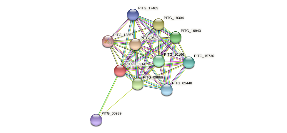 PITG_05314 protein (Phytophthora infestans) - STRING interaction network