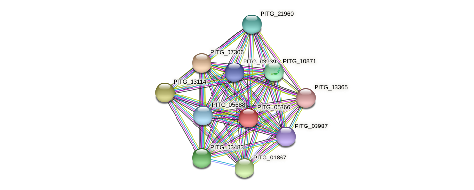 PITG_05366 protein (Phytophthora infestans) - STRING interaction network