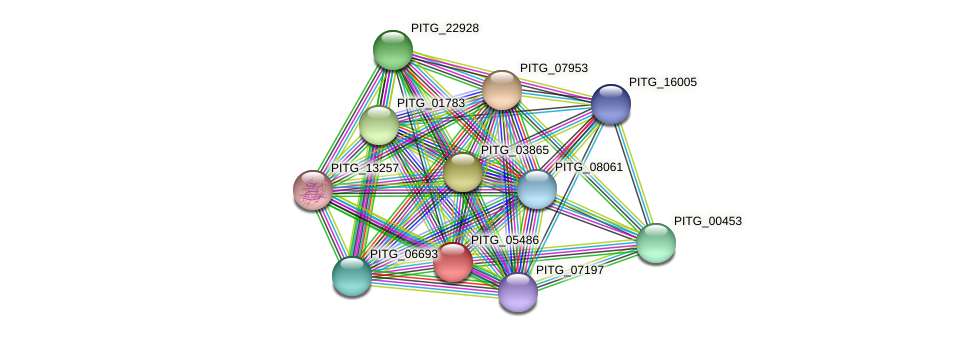 PITG_05486 protein (Phytophthora infestans) - STRING interaction network