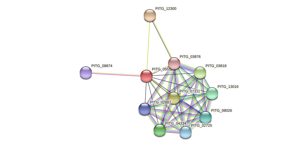 PITG_05511 protein (Phytophthora infestans) - STRING interaction network