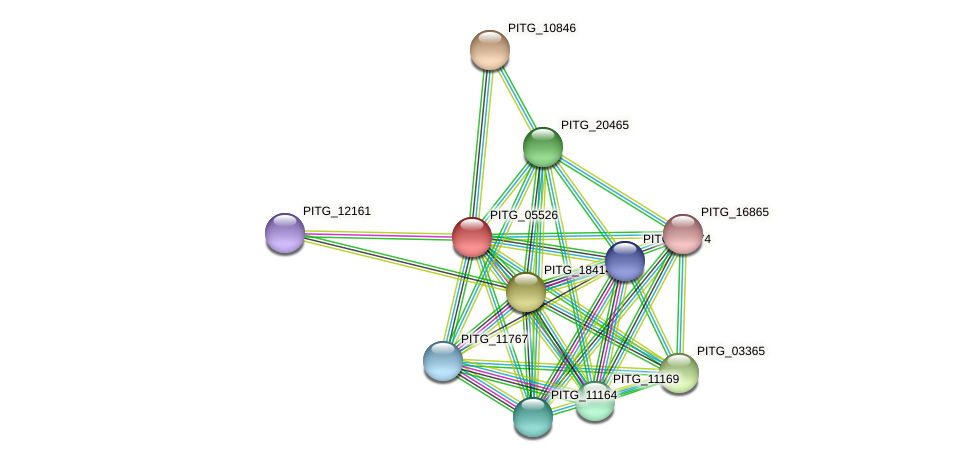 PITG_05526 protein (Phytophthora infestans) - STRING interaction network