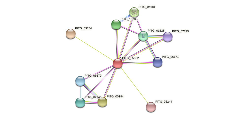 PITG_05532 protein (Phytophthora infestans) - STRING interaction network