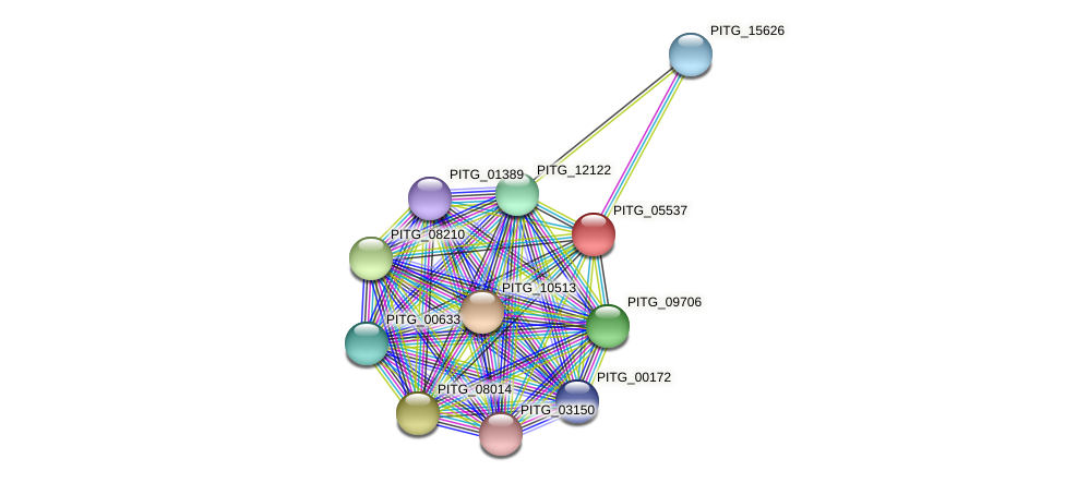 PITG_05537 protein (Phytophthora infestans) - STRING interaction network