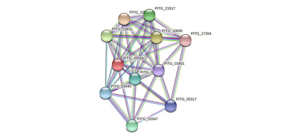 PITG_05558 protein (Phytophthora infestans) - STRING interaction network
