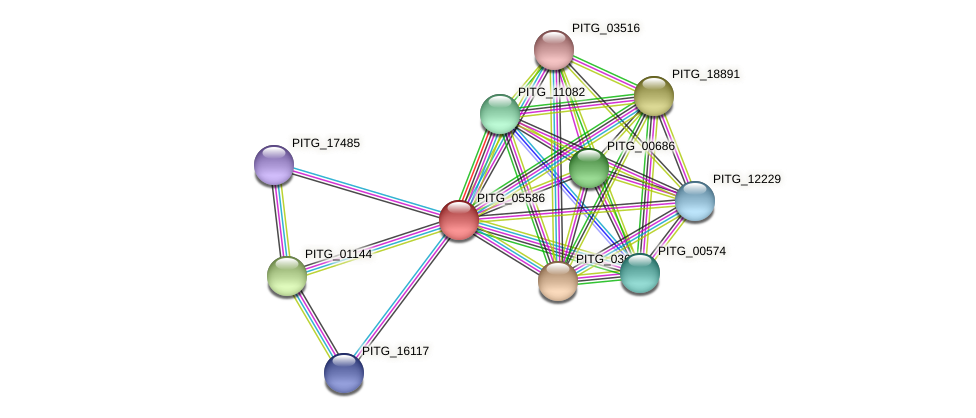 PITG_05586 protein (Phytophthora infestans) - STRING interaction network